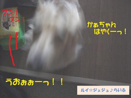 CIMG2414_20090823154933.jpg