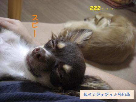 CIMG2648.jpg