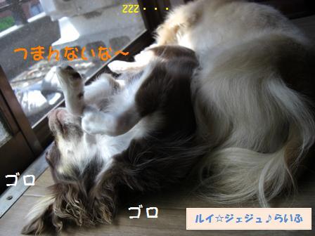CIMG2913.jpg