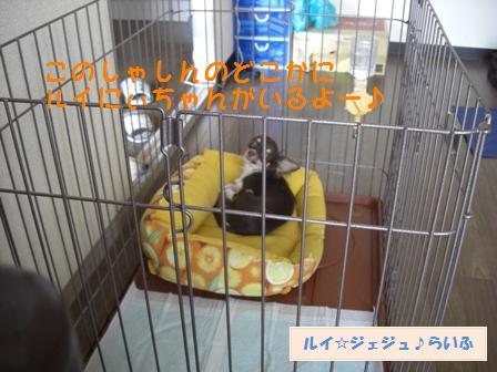 CIMG2923_20090906161428.jpg