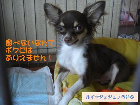 CIMG3046.jpg
