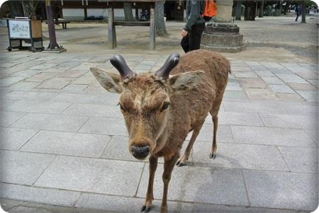 0410鹿