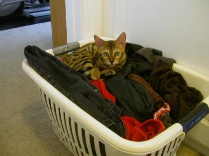 belli laundry bkt2