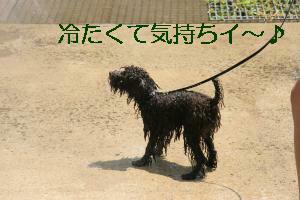 IMG_0609_convert_20110808165721.jpg