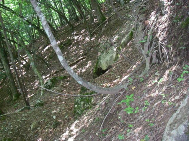 南アルプスー笹山(笹山東尾根)H20.7.19~20 015