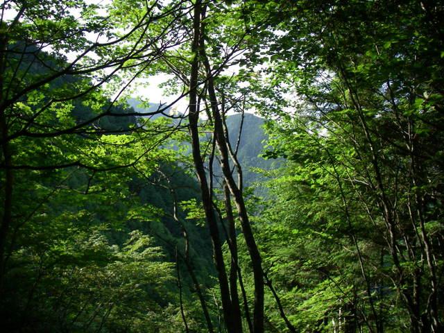 南アルプスー笹山(笹山東尾根)H20.7.19~20 026