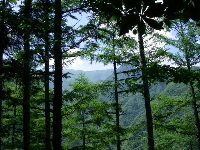 南アルプスー笹山(笹山東尾根)H20.7.19~20 021