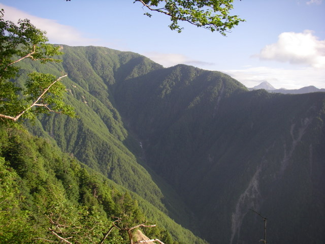 南アルプスー笹山(笹山東尾根)H20.7.19~20 034