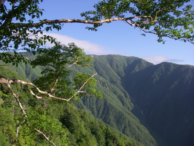 南アルプスー笹山(笹山東尾根)H20.7.19~20 033