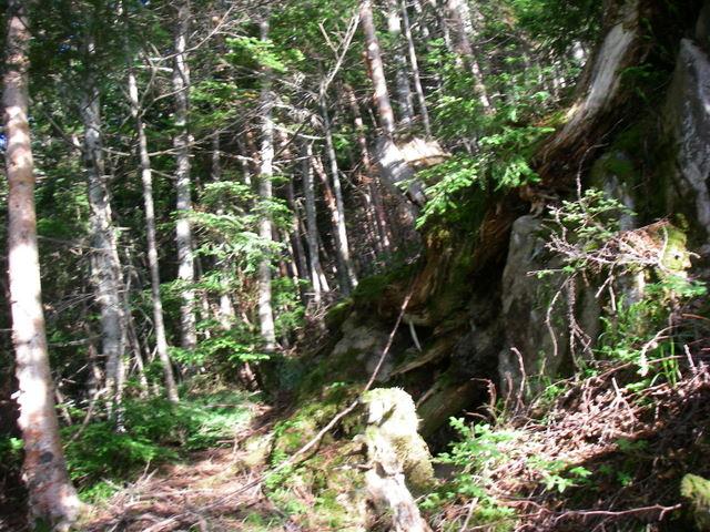 南アルプスー笹山(笹山東尾根)H20.7.19~20 031