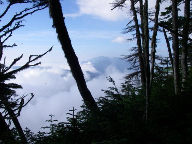 南アルプスー笹山(笹山東尾根)H20.7.19~20 042