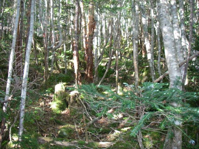 南アルプスー笹山(笹山東尾根)H20.7.19~20 038