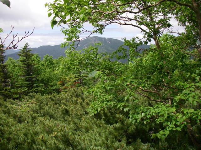 南アルプスー笹山(笹山東尾根)H20.7.19~20 048