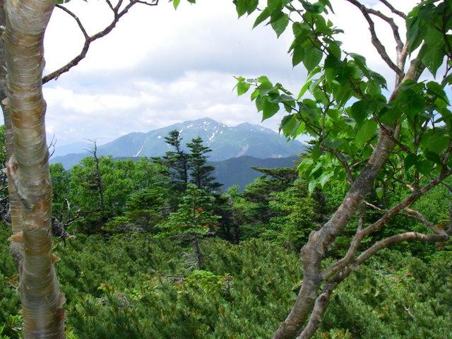 南アルプスー笹山(笹山東尾根)H20.7.19~20 047