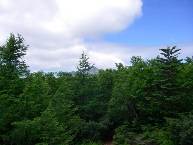 南アルプスー笹山(笹山東尾根)H20.7.19~20 046
