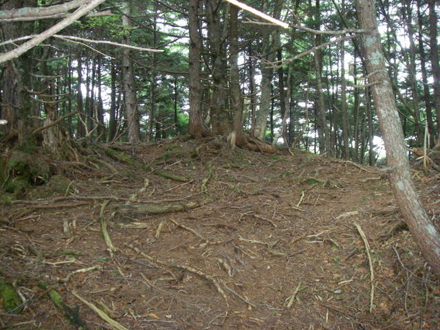 南アルプスー笹山(笹山東尾根)H20.7.19~20 057