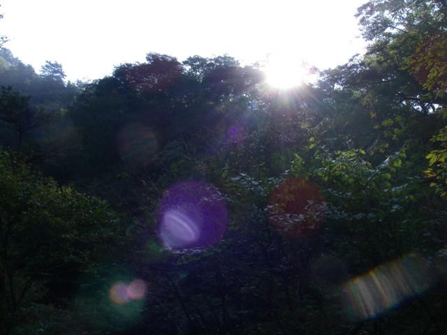 奥多摩ー酉谷山~長沢背稜~雲取山荘~鴨沢H20.10 (9)