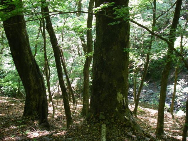 奥多摩ー酉谷山~長沢背稜~雲取山荘~鴨沢H20.10 (38)