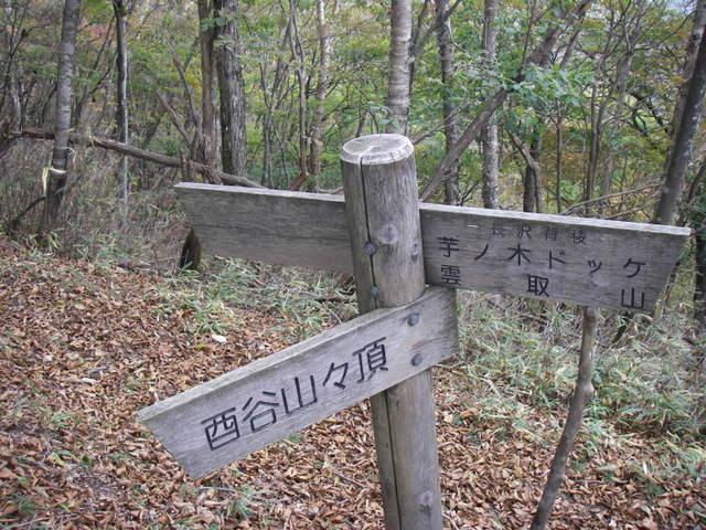 奥多摩ー酉谷山~長沢背稜~雲取山荘~鴨沢H20.10 (103)