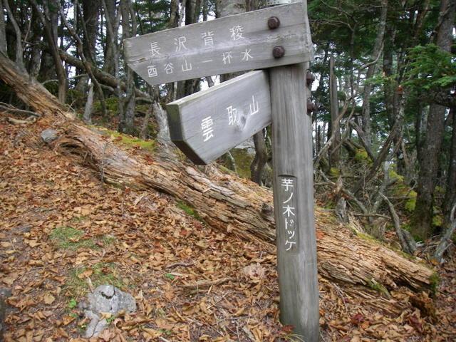 奥多摩ー酉谷山~長沢背稜~雲取山荘~鴨沢H20.10 (133)