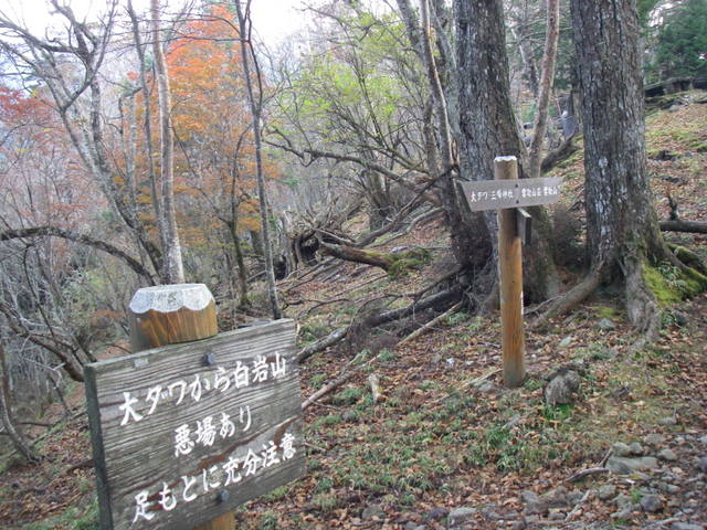 奥多摩ー酉谷山~長沢背稜~雲取山荘~鴨沢H20.10 (147)