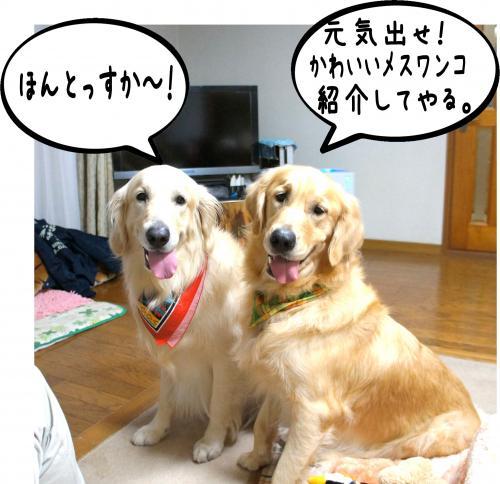 10_convert_20111124125659.jpg