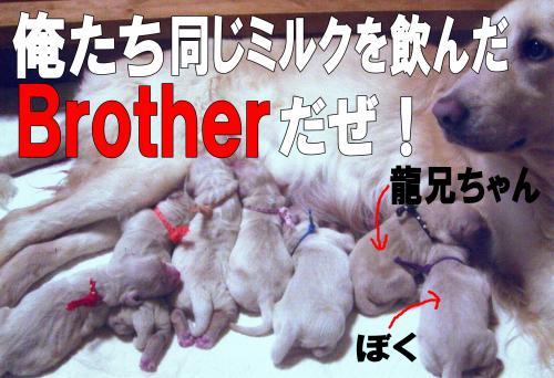 13_convert_20111127092148.jpg