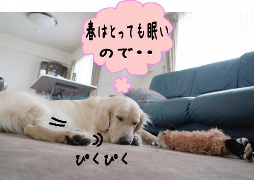 1_convert_20120424135136.jpg