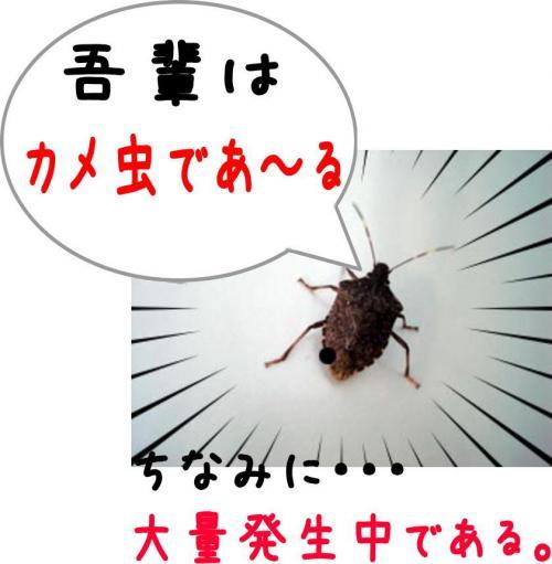 3_convert_20111120144914.jpg