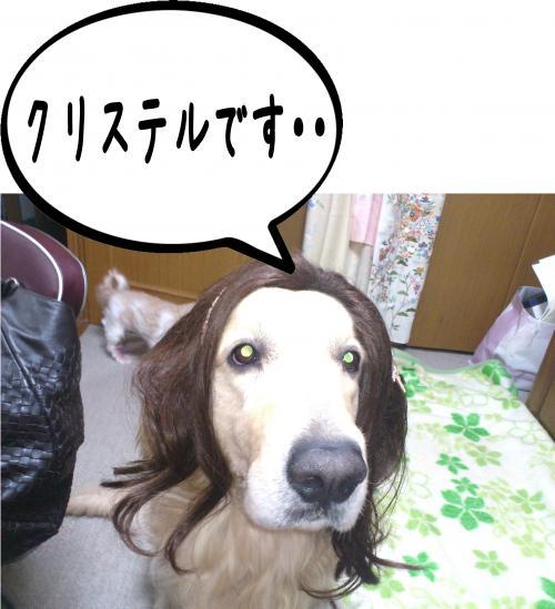 3_convert_20120417152110.jpg