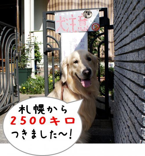 4_convert_20111124125352.jpg