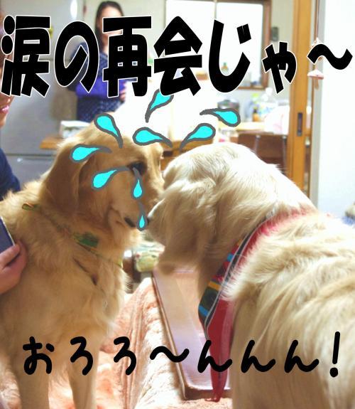 5_convert_20111124125418.jpg