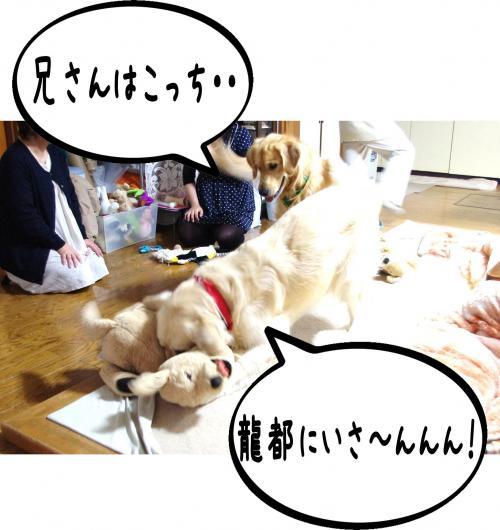 6_convert_20111124125447.jpg