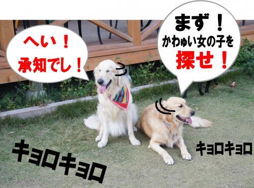 6_convert_20111204211827.jpg