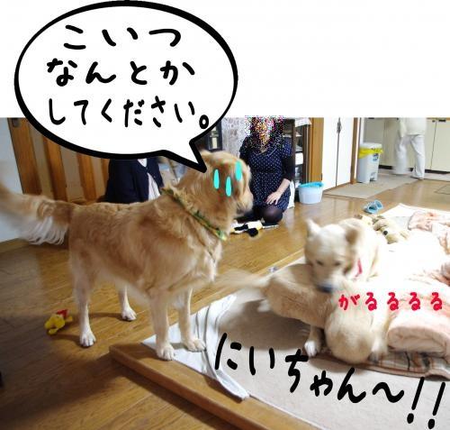 7_convert_20111124125517.jpg