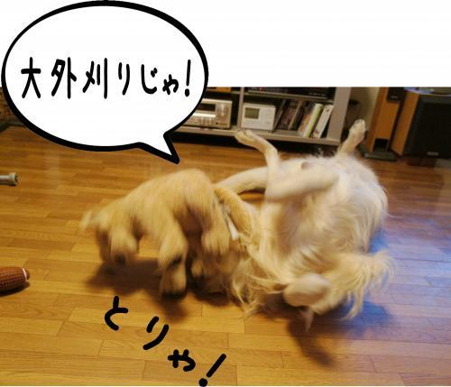 7_convert_20120118154106.jpg