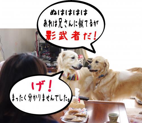 8_convert_20111124125547.jpg