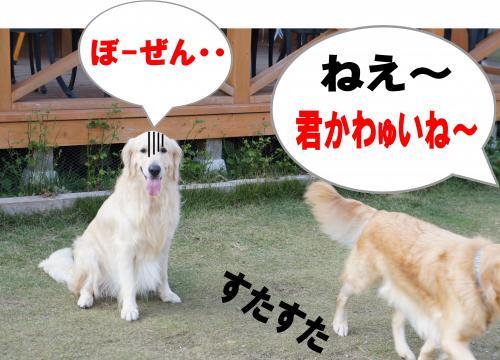 8_convert_20111204211927.jpg