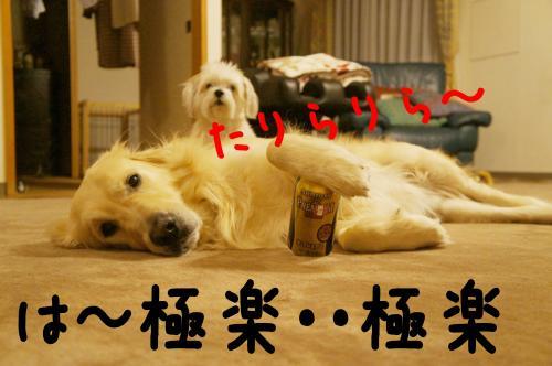 8_convert_20120128205152.jpg