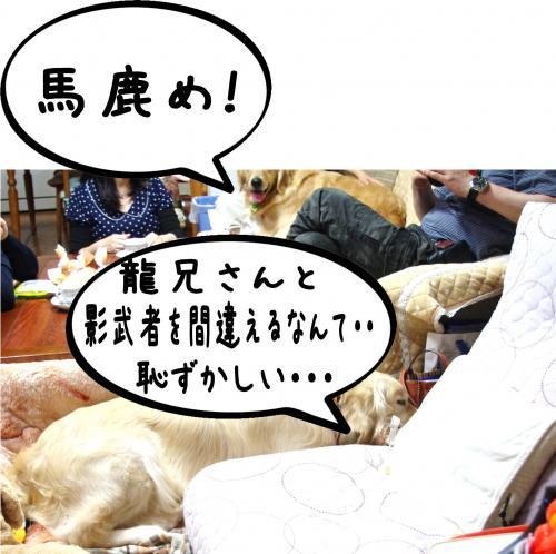 9_convert_20111124125616.jpg