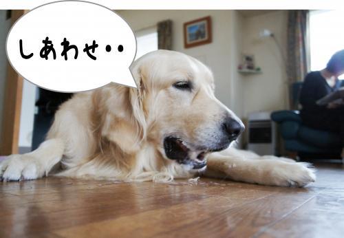 fuyu7_convert_20120320102200.jpg