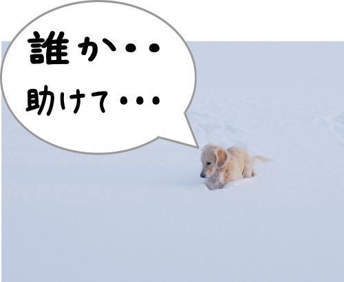sa11_convert_20120115172129.jpg