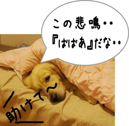 sa5_convert_20120115171843.jpg