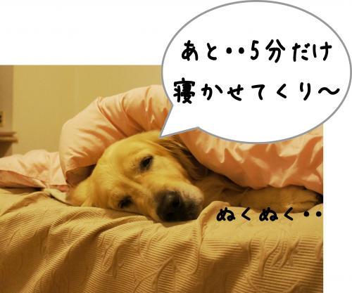 sa6_convert_20120115171915.jpg