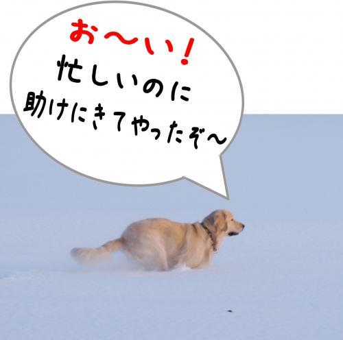sa8_convert_20120115172011.jpg