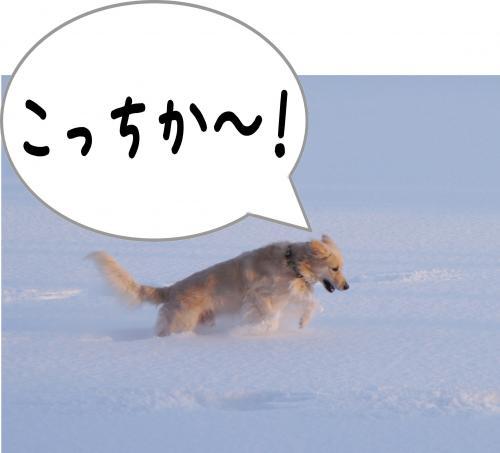 sa9_convert_20120115172037.jpg