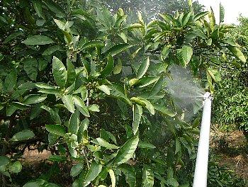 摘果剤散布