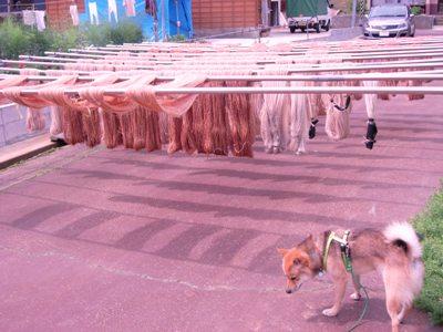 犬と和紙糸