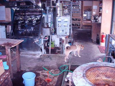 犬と染工房