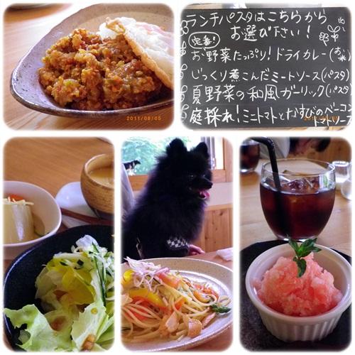 cats1_20110805152751.jpg